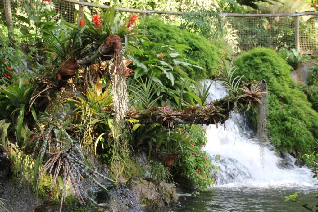 Jardin botanique de deshaies kara bes h tel et r sidence for Jardin botanique deshaies